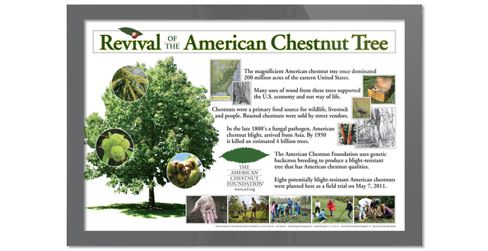 Informational outdoor sign for the American Chestnut Foundation